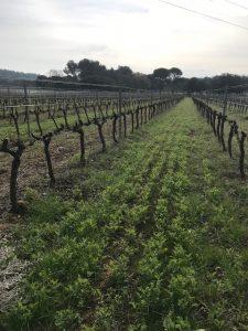 domaine sulazue vins biodynamie provence