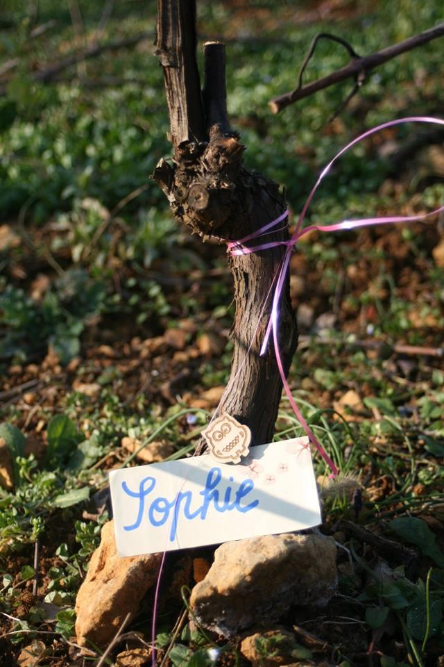 histoire de vin bourgogne