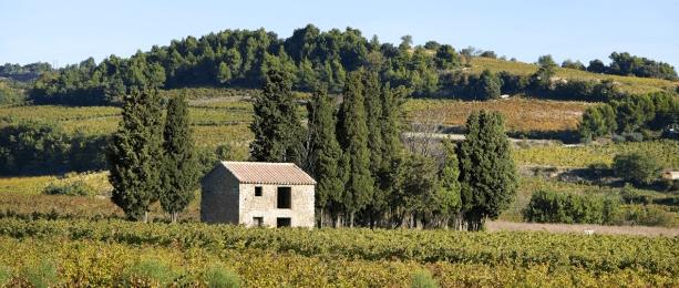 sentier viticole vins de rasteau oenotourisme paca