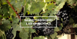 BALADES VIGNERONNES DES VINS DE PROVENCE @ LES CAVES COOP DU 13