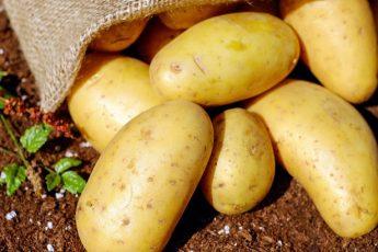 recette patia pomme de terre