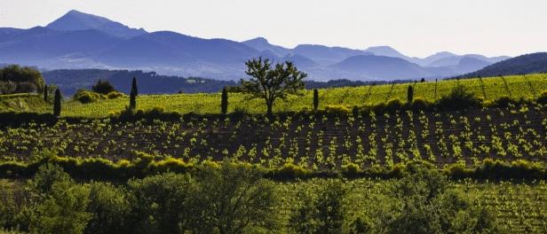 oenotourisme en vallée du rhône aop rasteau