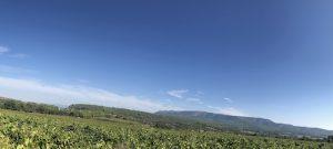 visite oenotourisme en provence