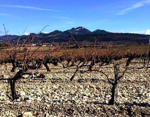 dégustation vins automne vacqueyras