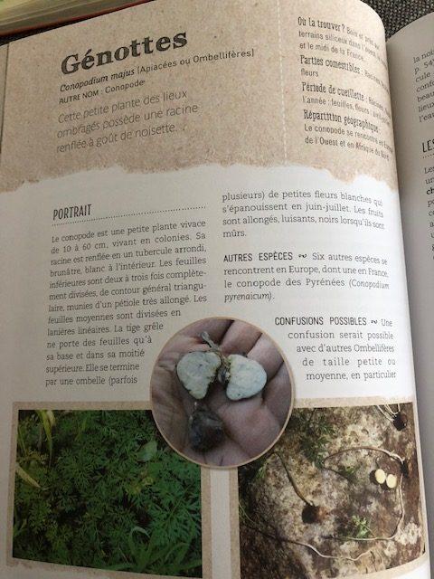 cueillir plantes sauvages comestibles