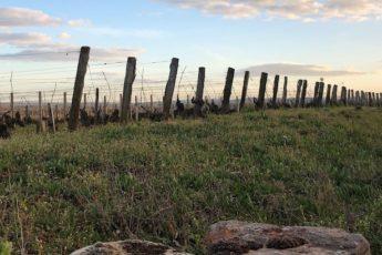 conversion vin reprendre domaine viticole